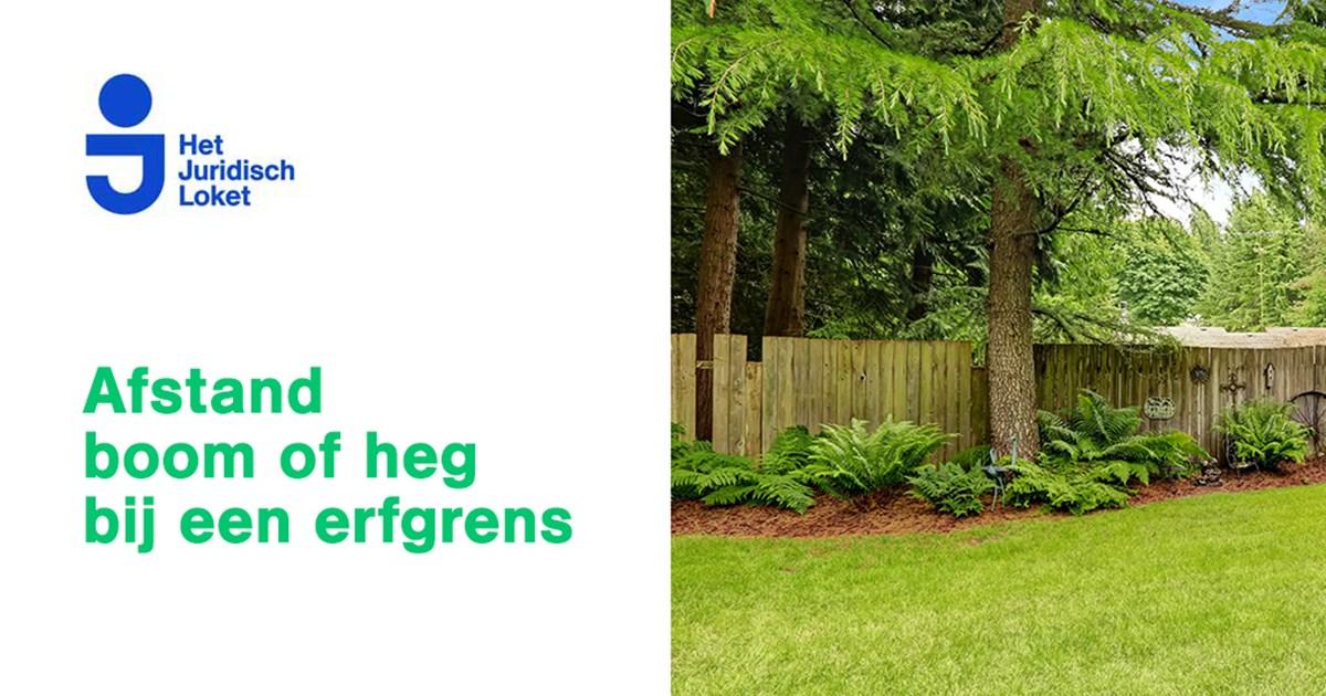Bomen Op Erfgrens.Boom Of Heg Buren Staat Dicht Op Erfgrens Het Juridisch Loket